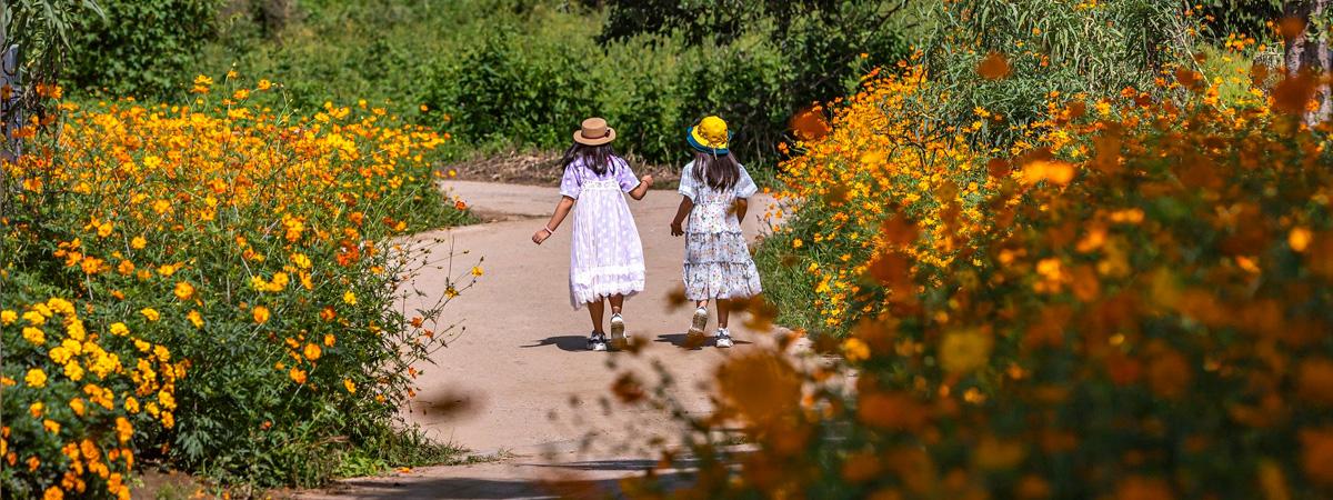 Kaksi tyttöä kävelee hiekkatiellä keskellä kukkamerta